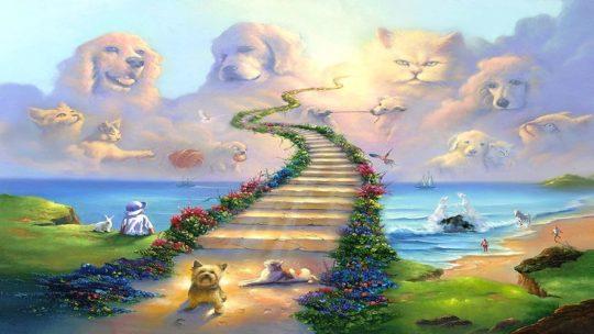 Ponte dell'arcobaleno: il paradiso dei cani